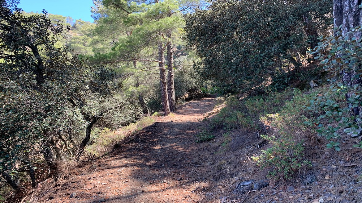 Mountain path in Paphos forest